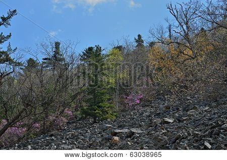 Spring Mountain Taiga