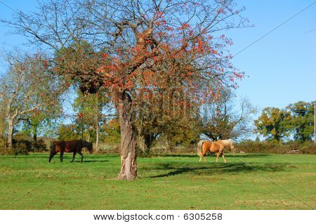 Horses strolling past a tree on a sunny autumn day poster