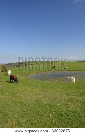 Traditional man made dew pond on the South Downs National Park in West Sussex,England.Used by farmers to provide their livestock with water. poster