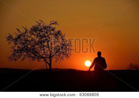 people walking beside tree at sunset