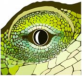 Eye of a reptile. Vector art in EPS format. poster