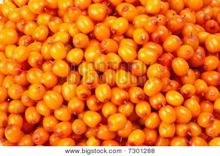 Abstract background from fresh sea buckthorn berries poster