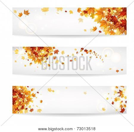 Set of autumn banners with beautiful maple leaves.