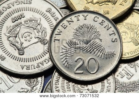 Coins of Singapore. Pink powder puff flower (Calliandra surinamensis) depicted in Singapore twenty cents coin.