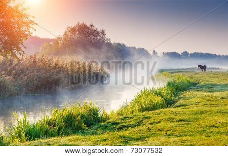 Fantastic foggy river with fresh green grass in the sunny beams. Dramatic colorful scenery. Seret river, Ternopil. Ukraine, Europe. Beauty world. poster