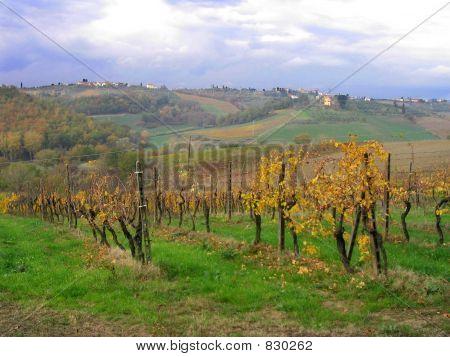 Tuscan Vineyard in Chianti
