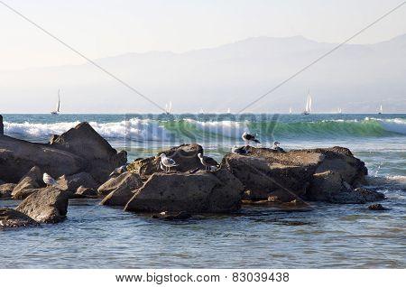 Sailing Boats and Seagulls