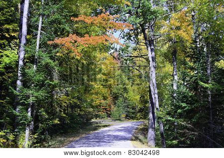 Fall colored road