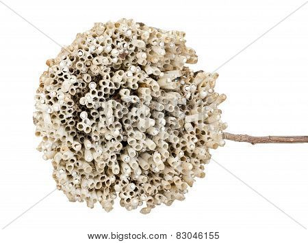 Hornet's Nest With Twig Isolated On White
