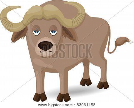 Buffalo - Illustration
