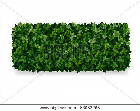 Boxwood Decorative Fence