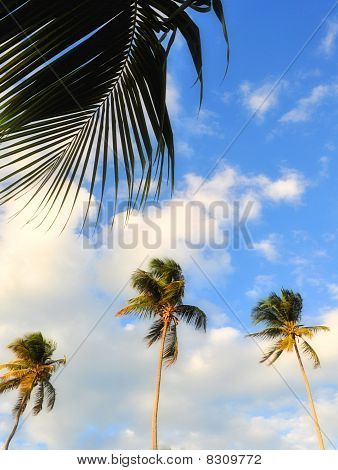 Three palm trees and sky