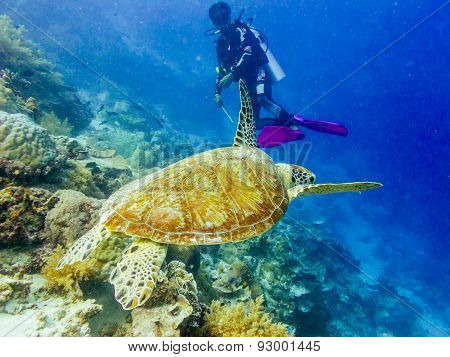 Diver and a turtle