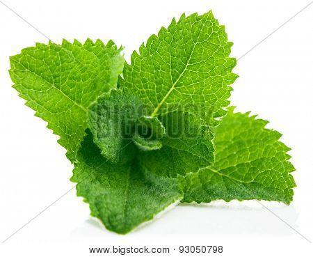 Fresh leaf mint. Isolated on white background