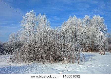 beautiful snow covered fields and woods in the frosty morning