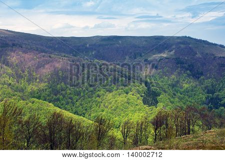 landscape consisting of a Carpathian mountains with green trees and fir-tree on a foreground and blue sky with white clouds on the background