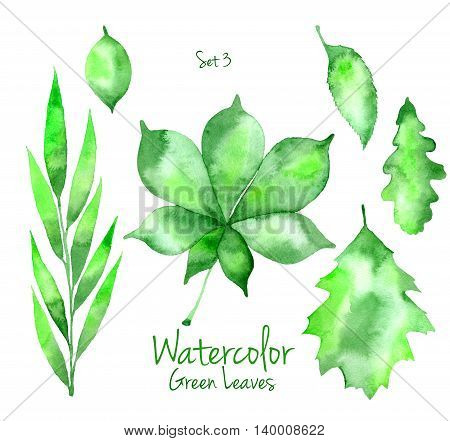 Collection of green summer watercolor leaves isolated on white background. Set of willow, chestnut, oak and pear tree leaves