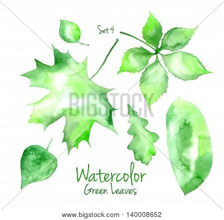 Collection of green summer watercolor leaves isolated on white background. Set of maple, oak, poplar, walnut and pear tree leaves