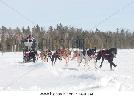 Dog Sled March 11 991 Copy 9