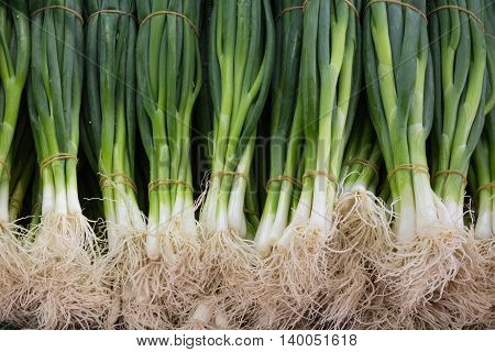 spring onions - bundle of spring onions closeup