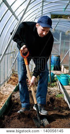 Man in greenhouse digging the soil with a shovel on the gardenbed in early spring