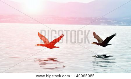 Two Cormorant flying over the water at sunset