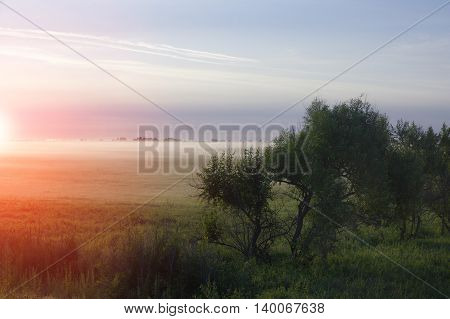 landscape with tree dramatic sky fog and beautiful autumn colors