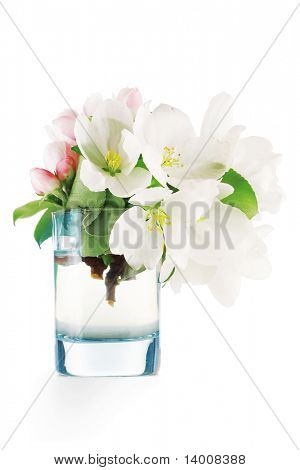 Apple blossoms in glass with water poster