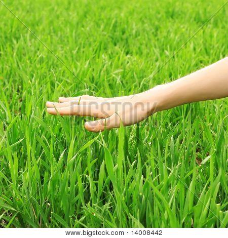 Hand over green grass