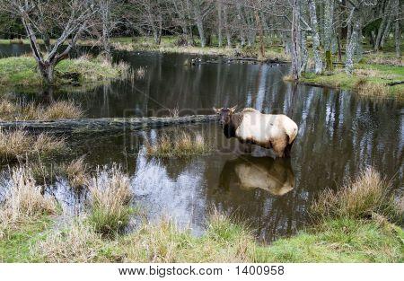 Elk_Lake