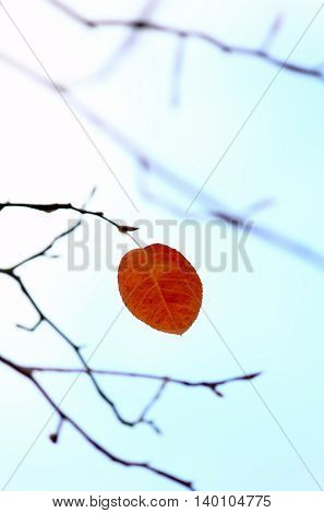 One single remaining autumn leaf on a tree branch - cold autumn sky in background