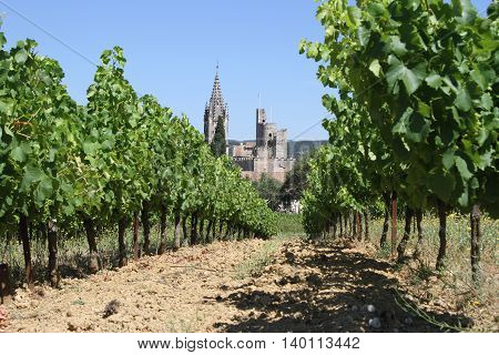 Vineyard with grapes and old town in backdrop in France