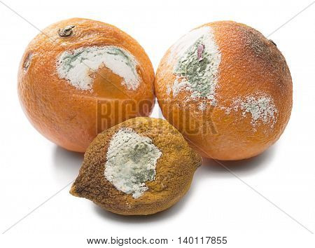 Decayed oranges isolated on white background.