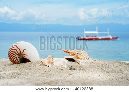 Nautilus shell and other conches with treasures box on the white sand tropical beach of turquoise philippine sea with diving philippine boat at sunny day under blue sky.