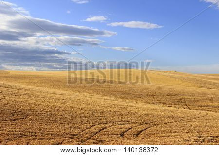Between Apulia and Basilicata.Hilly landscape with cornfields.ITALY .Hilly landscape: cornfields between light and shadow.