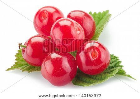 Nanking or felted cherry ftuits with leaves isolated on a white background.