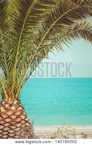 Palm tree on the beach by the sea. Retro color style, close up