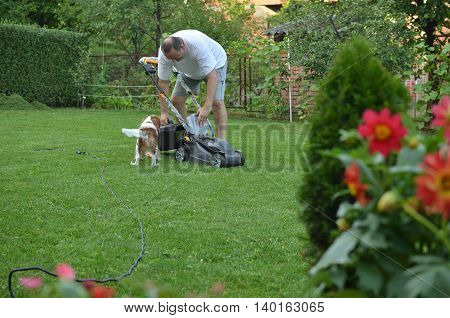 Man mowing a lawn and beautiful dog Cavalier King Charles Spaniel Blenheim