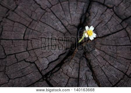 wildgrass growth on old crack stump (growth concept)