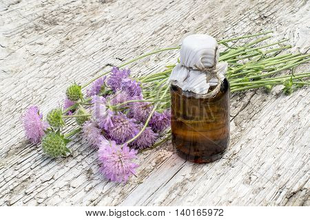 Medicinal plant Knautia arvensis commonly known as field scabious and brown pharmaceutical bottle on old wooden table. Used in herbal medicine is a major source of nectar. Selective focus