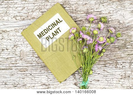 Medicinal plant Knautia arvensis commonly known as field scabious and herbalist handbook on old wooden table. Used in herbal medicine is a major source of nectar
