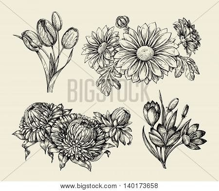 Flowers. Hand-drawn sketch flower, tulip, astra, aster crocus chrysanthemum Vector illustration