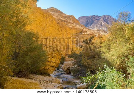 The fresh and shady area at the mountin river in deep gorge Ein Gedi Israel.