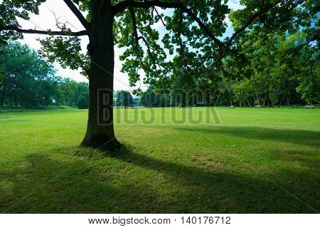 Tree shade and grass field