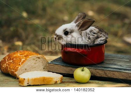 Little bunny looks for a tasty meal. Cute baby rabit in small red pot among the food