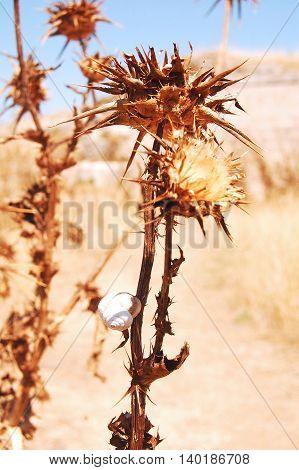 Summer vegetation sunburned of the Murgia - Basilicata - Italy