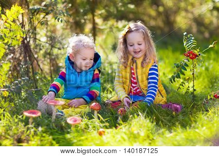 Happy laughing kids play in beautiful sunny autumn park. Little boy and girl watching toadstool mushroom in fall forest. Children hiking and playing outdoors. Preschooler learning toxic mushrooms.