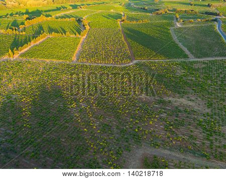 Aerial view of sunrise on vineyard in Chateauneuf du Pape, France, Europe