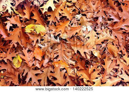 Forest floor in autumn. Autumn foliage background.