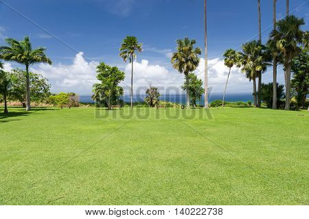 sunny landscape with palm trees and the ocean in Barbados Caribbean